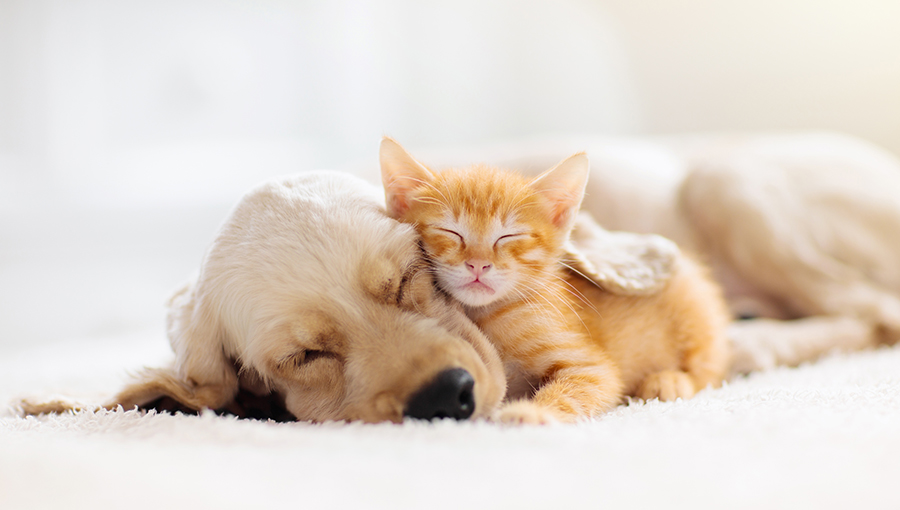 Registo de animais – Conheça o Sistema de Informação de Animais de Companhia (SIAC)